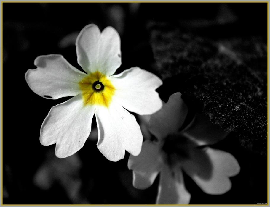 photoblog image Snow White