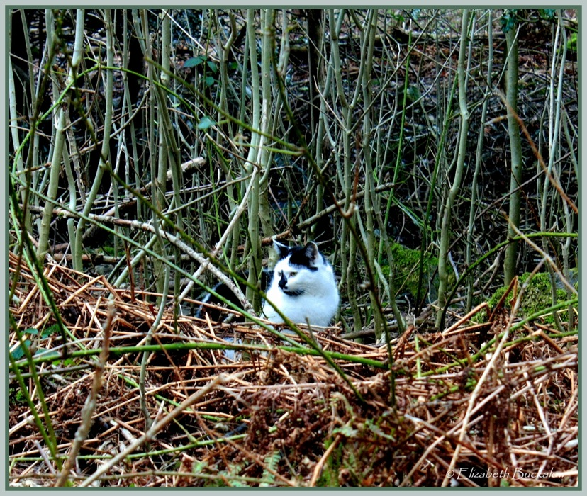 photoblog image Caturday