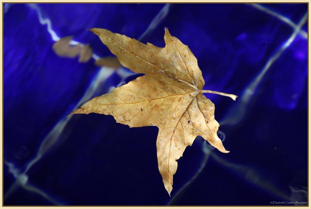 photoblog image Autumn Falls